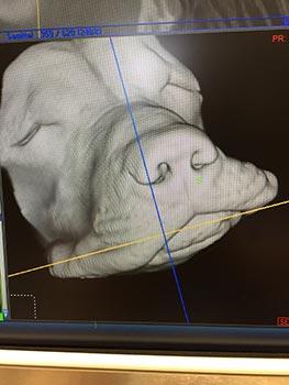 catVET scan